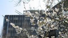 Frühling in Ahlen